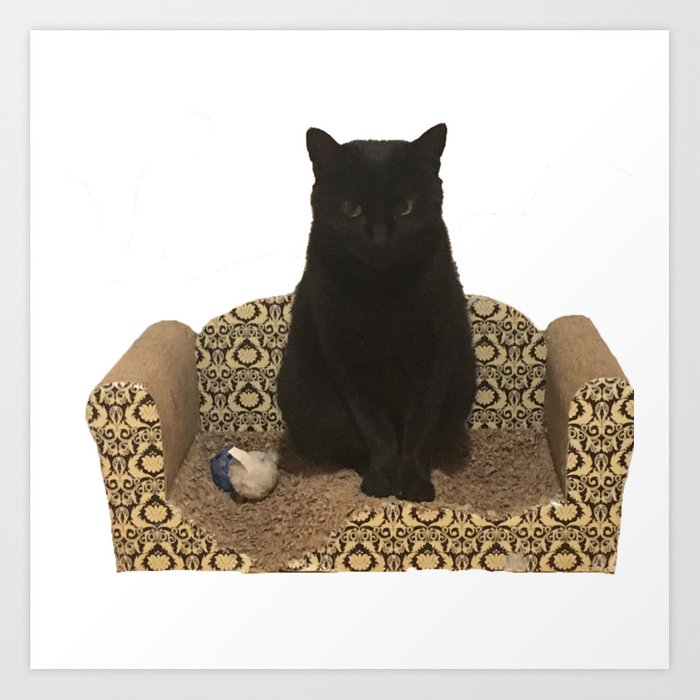 The Queen On Her Couch Edie The Manx Black Cat Photograph Art