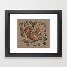 Red Squirrel Framed Art Print