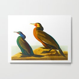 Violet-green Cormorant and Townsend's Cormorant Bird Metal Print