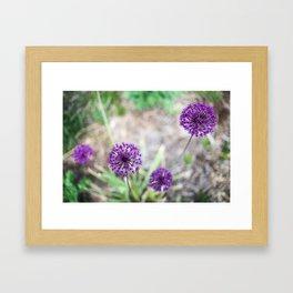 Purple Allium Framed Art Print