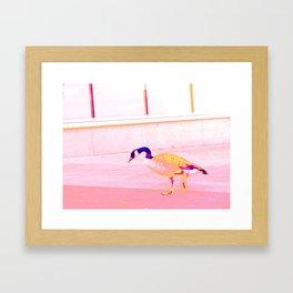 Canadian goose Framed Art Print