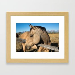 Shy - Horse Plays Coy in Western Wyoming Framed Art Print