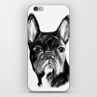 french bulldog iPhone & iPod Skins featuring French Bulldog by James Peart