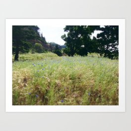 Bachelor's Button in Spring Art Print