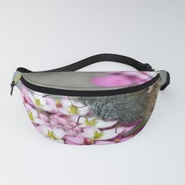 Fadet common butterfly pollination on beautiful pink flower on gray Fanny Pack