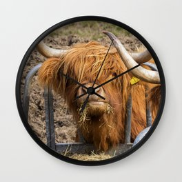Cute hungry ginger Scottish Highland cow Wall Clock