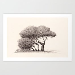 Pine Trees on a Country Road, Malta Art Print