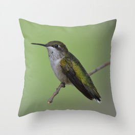 Ruby Throated Humming Bird At Rest Throw Pillow