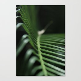 Feeling The Green Canvas Print