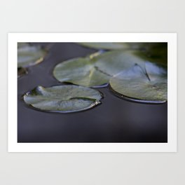 Water Lily Pads II Art Print