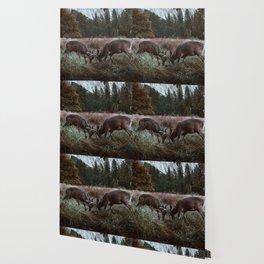 Yosemite Bucks Locking Horns Wallpaper