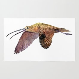 Long-billed Curlew Rug