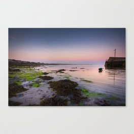 Dog chasing fish in Barna, Ireland Canvas Print