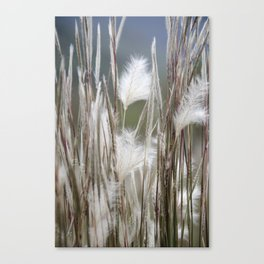 Feathery Field Canvas Print