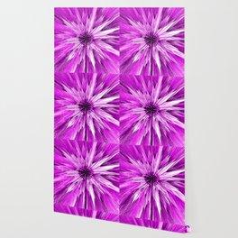 Hot Pink Star Burst Wallpaper