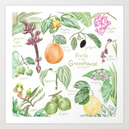 Wintertime Fruit in the Greenhouse Art Print