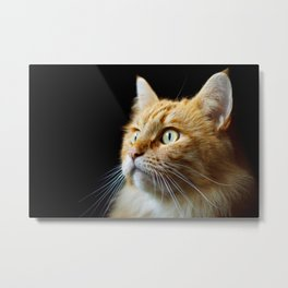 Portrait of ginger cat close-up. Metal Print