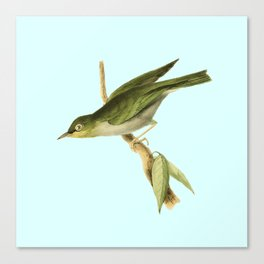 White-eyed Warbler Canvas Print