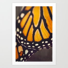 Monarch Study #4 Art Print
