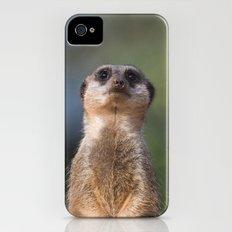 Meerkat iPhone (4, 4s) Slim Case