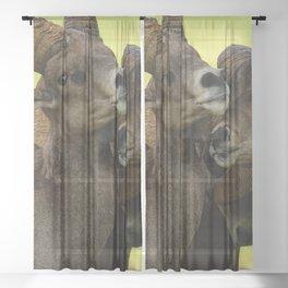 Desert Bighorn Rams 4299 - Closeup Sheer Curtain