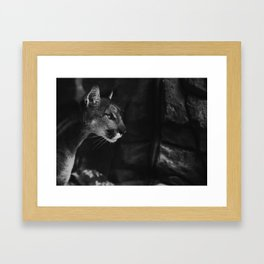 Cougar II Framed Art Print