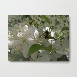 Bee in Blossoms Metal Print