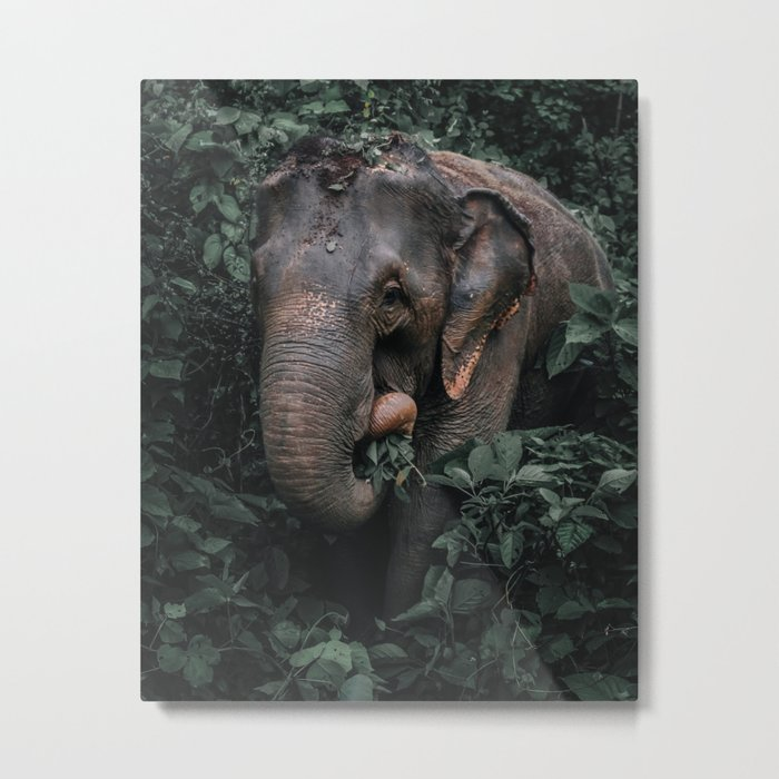 The Elephant King Metal Print