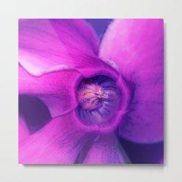 Blue, purple, pink cyclamen Metal Print