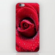 Scarlet Rose  iPhone & iPod Skin