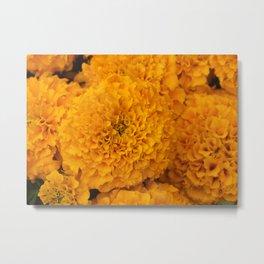 Golden Marigold Flowers Close up Metal Print