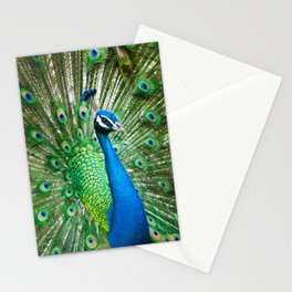 Beautiful Male Peacock Stationery Cards