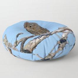 Watercolor Bird, Lincoln's Sparrow 01, Cape Breton, Captain Jack Sparrow is it? Floor Pillow