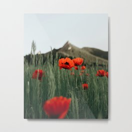 Poppies popping at Chautauqua Park Metal Print