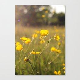 Wild Flowers | Buttercups Canvas Print