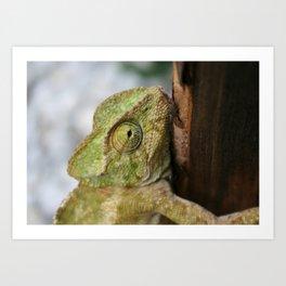Chameleon Hanging On To A Door Art Print