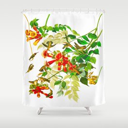 Ruby-throated Humming Bird Shower Curtain