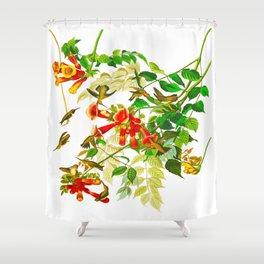 Ruby-throated Humming Bird Shower Curtain