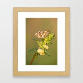 Knapweed Fritillary Framed Art Print