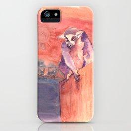 Madagascar's lemur catta iPhone Case
