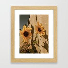 Sunflower pair Framed Art Print