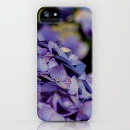 Makro_Hortensie_1 iPhone Case