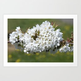 the smell of spring -4- Art Print