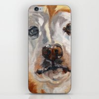 gemma correll iPhone & iPod Skins featuring Gemma the Golden Retriever by Barking Dog Creations Studio