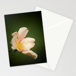 October rose Stationery Cards
