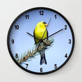Bird's Eye Blue (American Goldfinch on Blue Spruce) Wall Clock