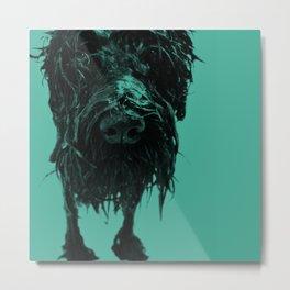 Shower dog Metal Print