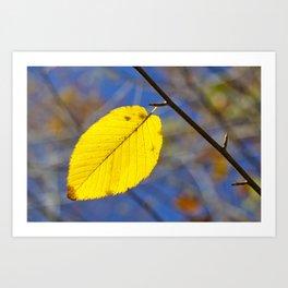 Yellow leaf against blue sky Art Print