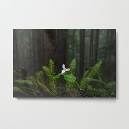 White Flowered Trillium Ovatum on the Edge of a Ledge in Lush Green Oregon Forest Metal Print