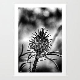 Thorn II Art Print